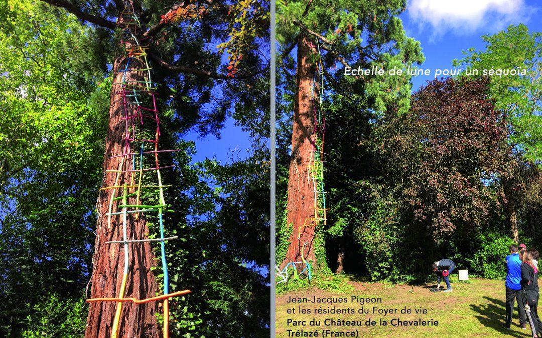 Echelle de lune pour un séquoia 2019